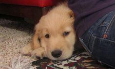 Office puppy dog, Burton